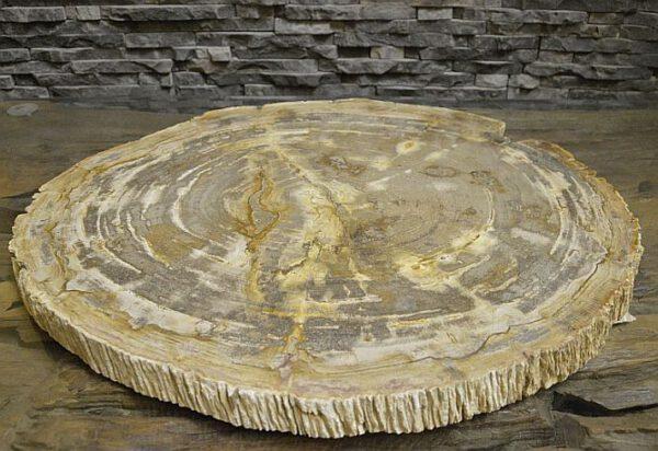 versteinerte fossile Platte Baumscheibe poliert petrified wood versteinertes Holz fossile TischplattevH62